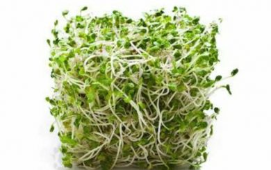 Clover Sprouts E. coli O103 Hits Utah Hard With Most Illnesses of Any State