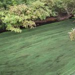 Avoid Blue-Green Algae in Lakes and Ponds