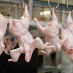 Chinese Meat Plant Implicated in Food Safety Scandal