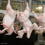 Stop Foodborne Illness, CSPI Call For Poultry Safety Modernization