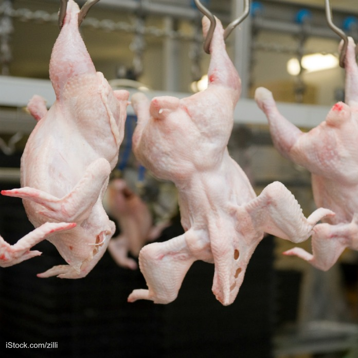 USDA Increasing Chicken Slaughter Line Speeds, Granting Waivers