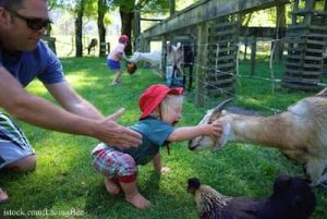 Child at Petting Zoo