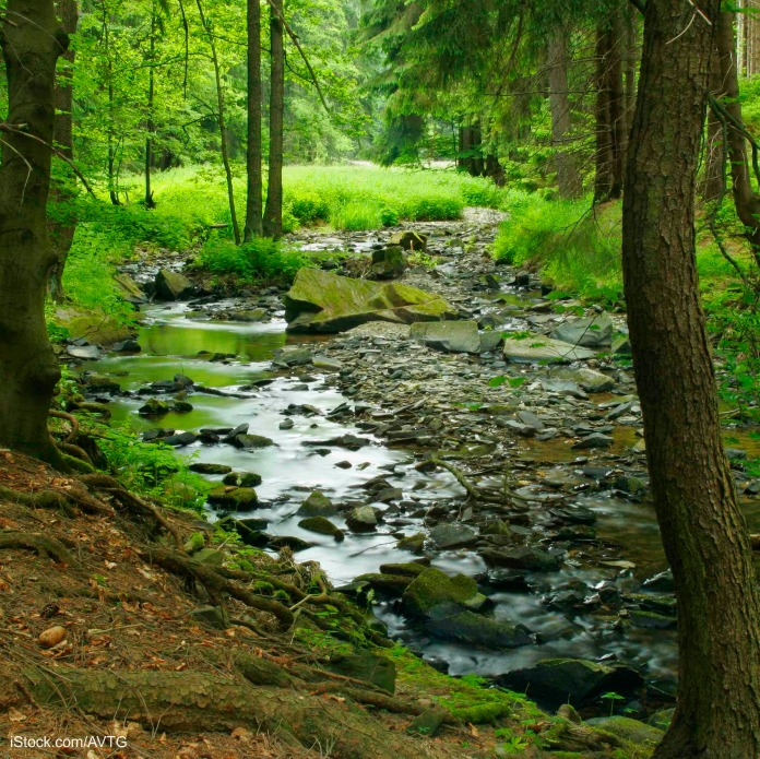 Creek Forest