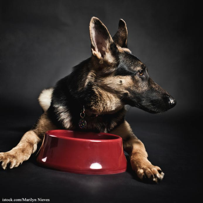 Dog Food Salmonella Recall