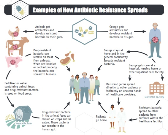 Drug-resistant-bacteria-cycle