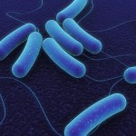 E. coli at West Valley Federico's Restaurant Harmed 94 People
