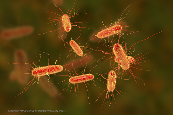 Long Term Effects of Food Poisoning Illnesses Can Be Significant