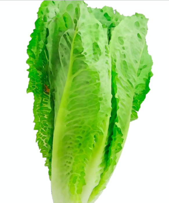 E. coli Lawyer - Whole head of Romaine vertical