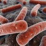 E.coli bacteria under electron microscope