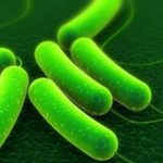 Carbon E. coli Outbreak: 50 Sick, 14 Hospitalized