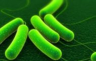Monroe Montessori School in WA Closed for Possible E. coli