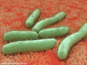E. Coli Bacteria On Tissue