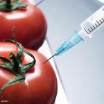 GAO Says USDA Needs to Enhance Oversight of GMO Crops