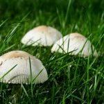 LA School District Issues Safety Alert About Wild Mushrooms
