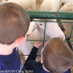 Kids at a Petting Zoo