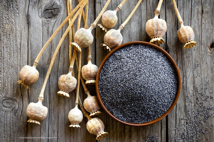 CSPI Calls on FDA to End Sales of Unwashed Poppy Seeds After 12 Americans Die