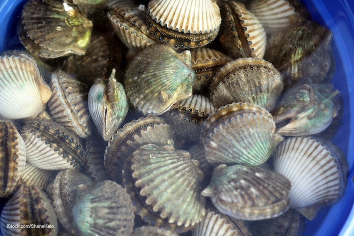 How does hepatitis a get into shellfish for Raw fish food poisoning