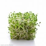 Raw Sprouts