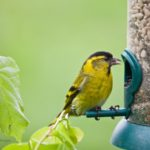 Salmonellosis in Birds Continues to Spread Around the Country