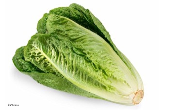 Romaine Lettuce deadly E. coli O157:H7 Outbreak