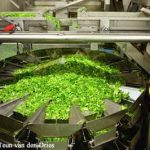 Researchers Develop Antimicrobial Wash for Fresh Produce