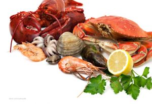 Shellfish Photo