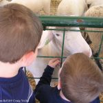 Petting Zoo E. coli Outbreaks in 2013