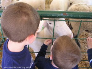 State Fair Petting Zoo