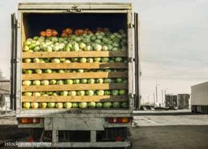Truck-with-Cabbages