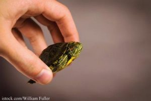 Petco S Turtle Turn In Program A Response To Salmonella