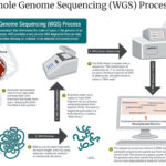 FDA Assesses Whole Genome Sequencing Effectiveness