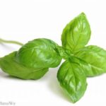 Rock Garden Organic Basil Recalled For Possible Cyclospora