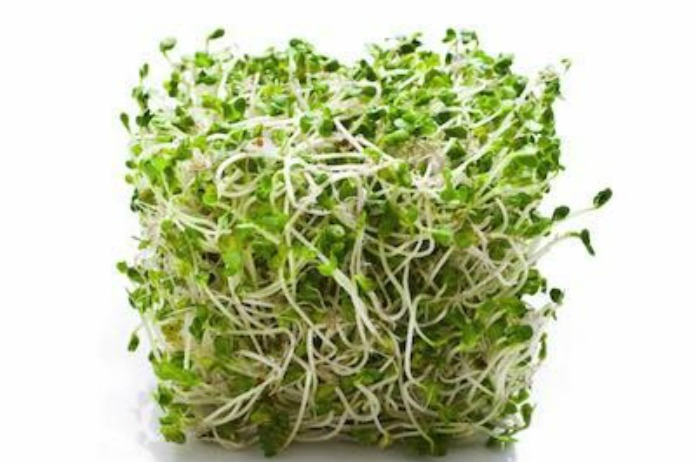 FDA Issues New Guidance to Improve Safety of Sprouts