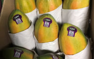 Argroson's Will Not Recall Cavi Papayas Likely Linked to Salmonella Outbreak