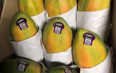 Salmonella Uganda Outbreak Potentially Linked to Cavi Papayas Ends with 81 Sick