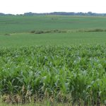 Study Analyzes GMO Crops and Pesticide Use in Maize and Soybeans