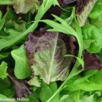 Some Who Ate Recalled Dole Salads Still Watching for Listeria Symptoms