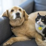 Pet Food Safety: How to Handle Food You Choose For Your Dog or Cat So You Don't Get Sick
