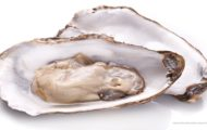 Malpeque Oysters Recalled in Canada for Possible Salmonella