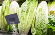 Adams Bros Farm Romaine E. coli Outbreak