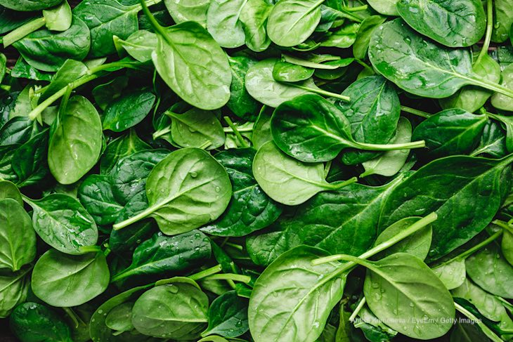 Can Spinach Be Contaminated With Pathogens At Germination?