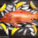 Do You Eat Fish? Learn About Ciguatera Food Poisoning