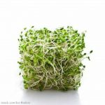 Minnesota Legal Roundtable Centers on Sprouts, E. coli Lawsuits