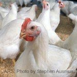 Avian Flu Discovered in Wild Birds in Washington State