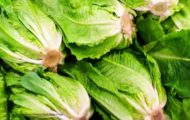 FDA Updates Romaine E. coli O157:H7 Outbreaks